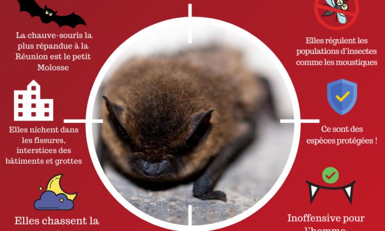 BHS, Ce qu'il faut savoir sur les chauves-souris